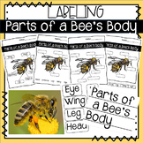 Non Fiction: Labeling Parts of a Bee's Body - Anchor Chart & Student Templates