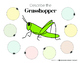 Insects Non-Fiction Speech & Language Pack FREEBIE