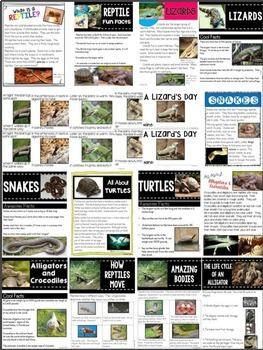 Nonfiction Reading- Common Core Close Reading and Writing K-2 Reptile Edition