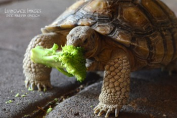 Non-fiction Endangered Species - Buddy Comes to Breakfast