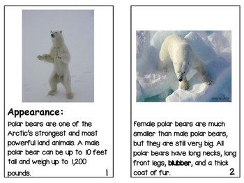 Non- Fiction Polar Bear Reader