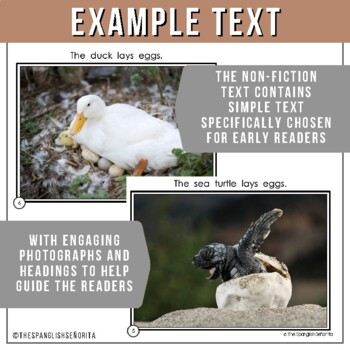 Non-Fiction Spanish Reader ¿Qué animales ponen huevos? - What animals lays eggs?