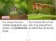 Non-Fiction Spanish book bundle - Los Insectos