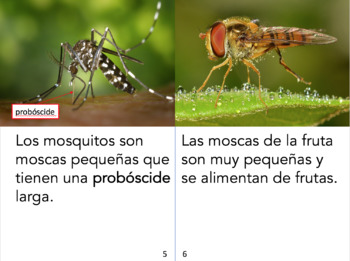Non-Fiction Spanish book bundle - Los insectos y los arácnidos