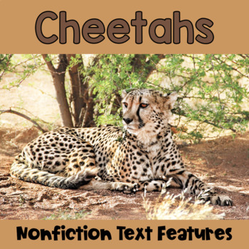 Non-Fiction Text Features: Cheetahs
