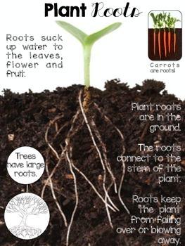 Plants Nonfiction Passages and Text Dependent Questions
