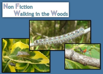 Non Fiction:  Walking in the Woods