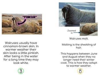 Non-Fiction Walrus Early Readers