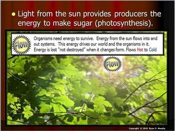 Ecology Nonliving Factor, Light
