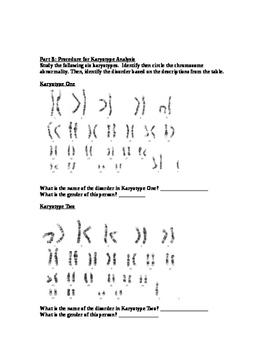 Nondisjuction Karyotype Activity