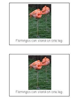 Nonfiction Beginning Reader Printable Book - Flamingos