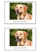 Nonfiction Beginning Reader Printable Book - Pets