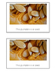 Nonfiction Beginning Reader Printable Book - Pumpkin Life Cycle