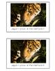 Nonfiction Beginning Reader Printable Book - Rainforest