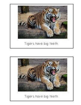 Nonfiction Beginning Reader Printable Book - Tigers