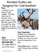 Reindeer Close Reading-Informational Text- Differentiated Texts & Vocab-
