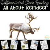 Reindeer   Differentiated Texts   Nonfiction Close Reading