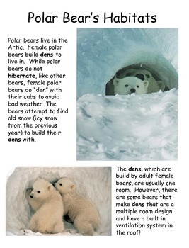 Polar Bears Differentiated Texts Nonfiction Close Reading NO PREP