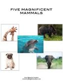 Nonfiction: Five Magnificent Mammals