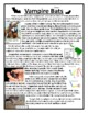Animal Bats Nonfiction Main Idea and Details Activities Story Nonfiction Bats
