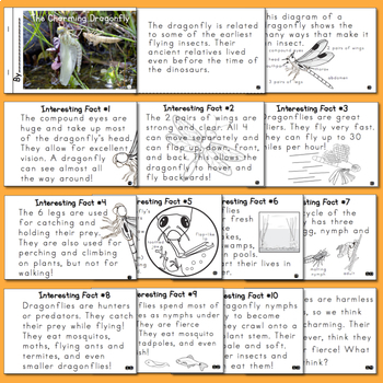 Nonfiction Insect Mini-Books  BUNDLE!