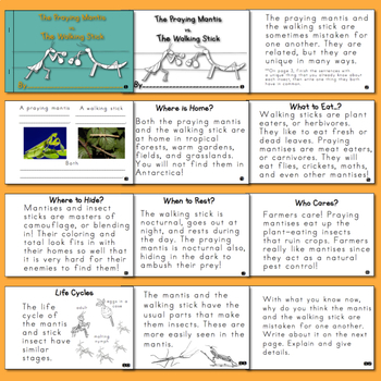 Nonfiction Insect Mini-Books  The Praying Mantis Vs. the Walking stick