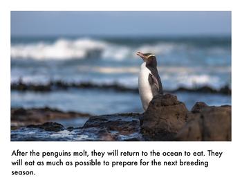 Nonfiction Picture Book Bundle: Penguins