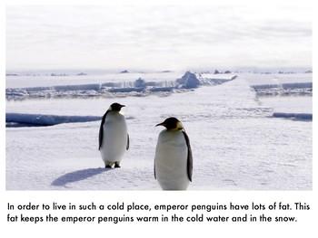 Nonfiction Picture Book: Emperor Penguins