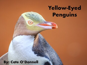 Nonfiction Picture Book: Yellow-Eyed Penguins