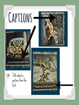Nonfiction Text Feature Posters