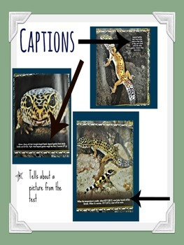 Nonfiction Text Feature Posters