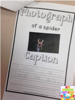 First Grade Non-Fiction: Spiders
