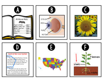Nonfiction Text Features: Posters, Student Books, Games, & More!