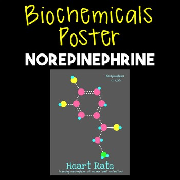 Norepinephrine--Biochemical Poster