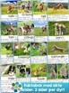 Norsk: Gårdsdyrbabyer - lese- og skriveopplæring inkl fakt