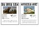 North American Animal Cards