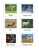 Continent Animal Cards, North America