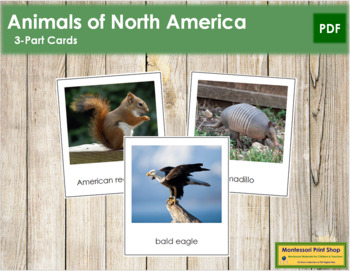 North American Animals: 3-Part Cards