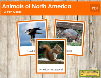 North American Animals: 3-Part Cards (color borders)