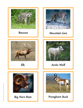 Continent Animal Cards, North America (colored border)