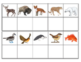 North American Animals:  Mini Matching and Vocabulary Enrichment Cards
