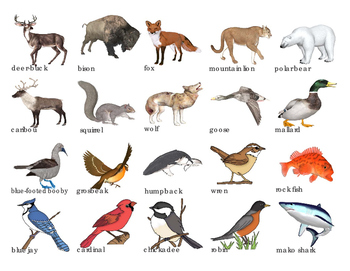 Image result for north american animals