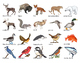 North American Animals: Match-up and Vocabulary Enrichment Cards