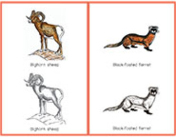 North American Animals: Tracing Cards