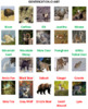 North American Animals Word Search Puzzles