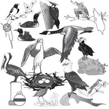 North American Birds Clip Art  - 24 Piece Set - Color & Grayscale