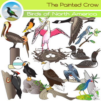 North American Birds Clip Art  - 24 Piece Set - Color & Grayscale