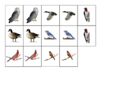 North American Birds Matching cards