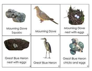 North American Birds cards: including adults, nests, young, and eggs