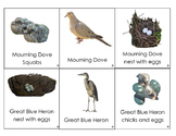 North American Birds cards: including adults, nests, young